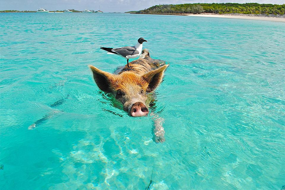 Big Major Cay - Bahamas