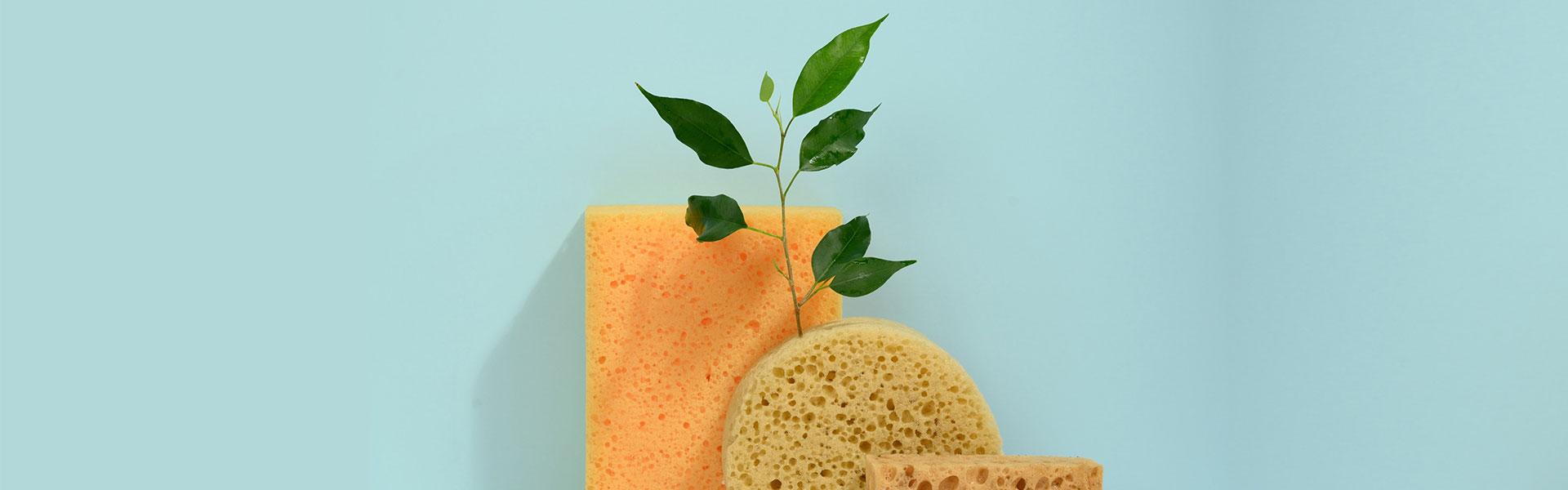 Como usar esponjas para salvar as plantas